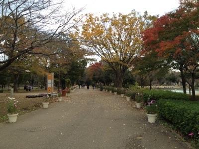20121115-234500.jpg