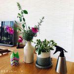 テレビの横に大きな観葉植物を置きたい。